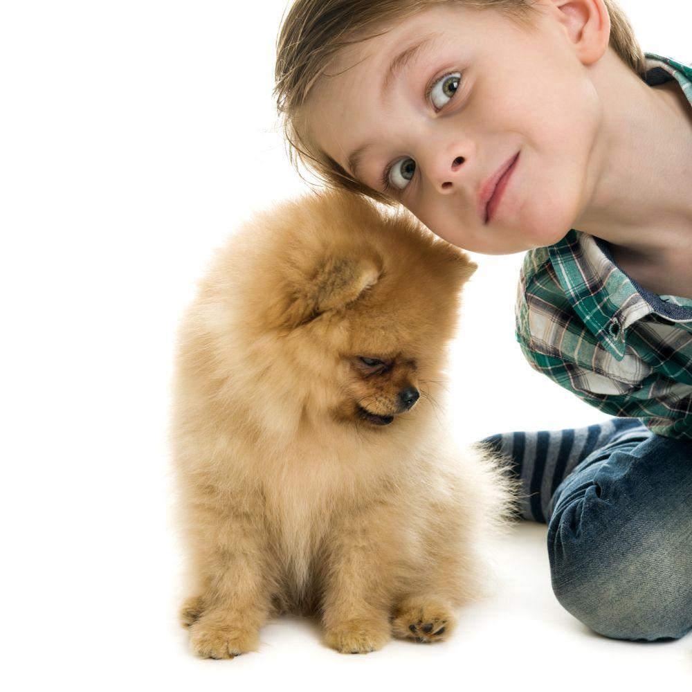 Kinder bringen Spitz in Not