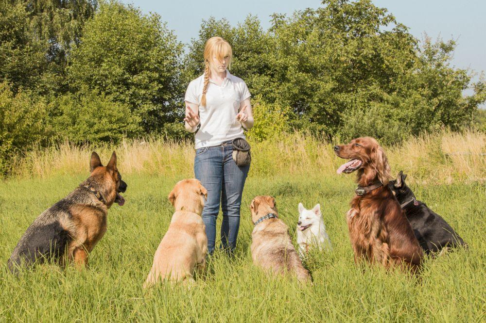 Optimal für die Spitz Erziehung ist der Besuch der Hundeschule