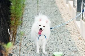 Spitz Hund draußen - Bewegung