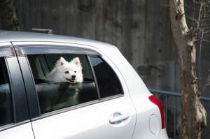 Urlaub Hund