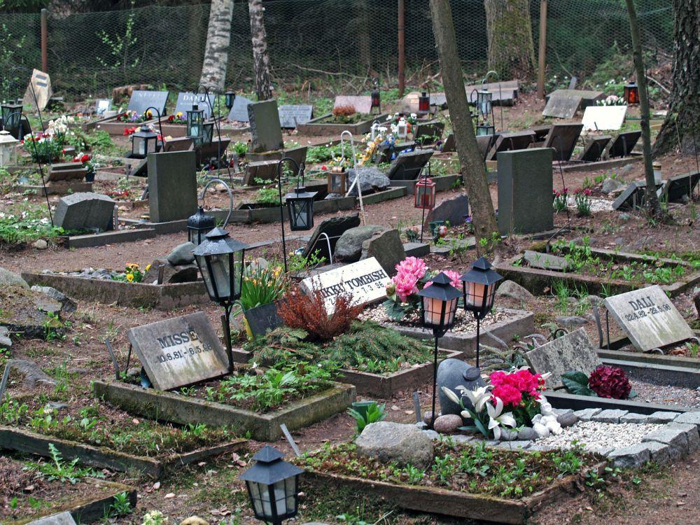 Den Spitz auf dem Tierfriedhof begraben.