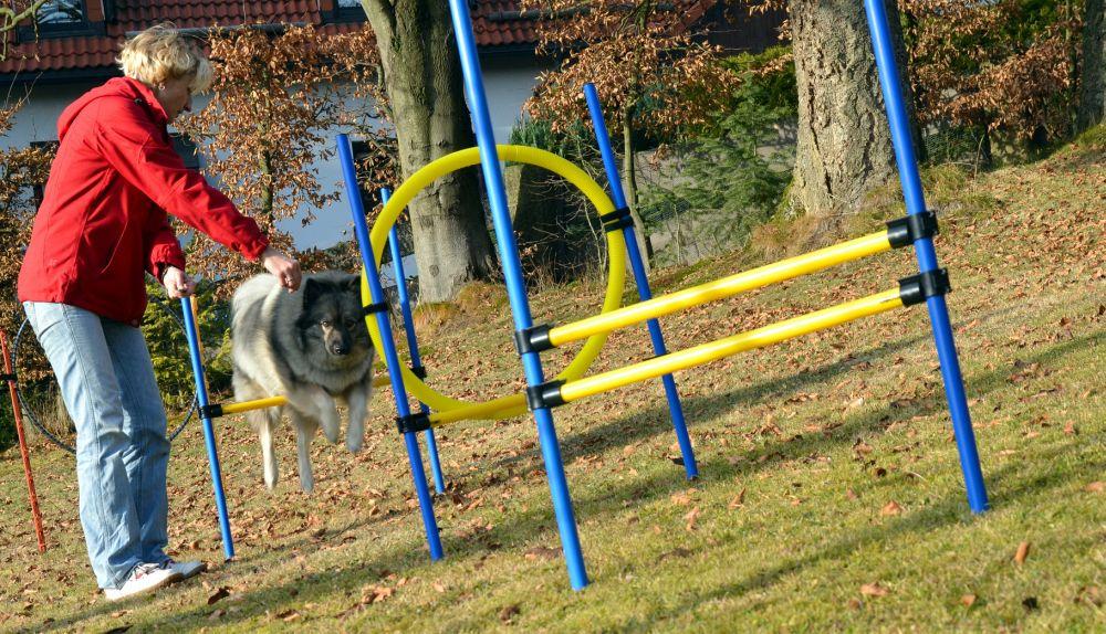 Agility Hunde Sport Sprung Spitz Beschäftigung