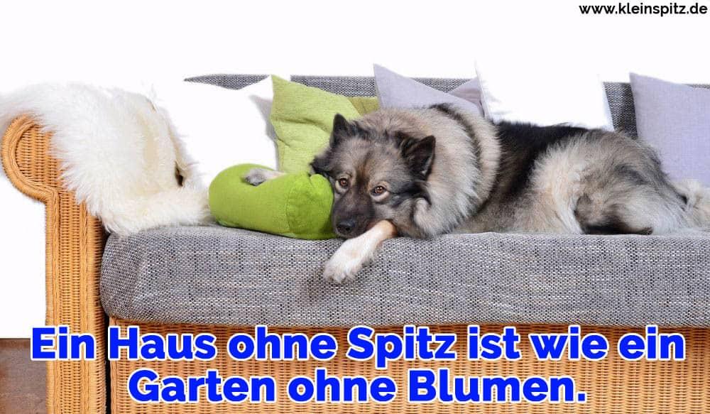 Hund auf Sofa mit Kissen
