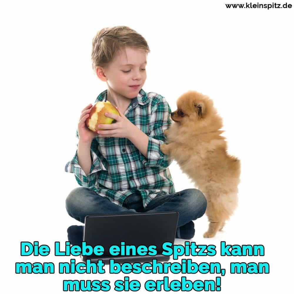 Ein Junge spielt mit seinem Spitz mit einem Spielzeug