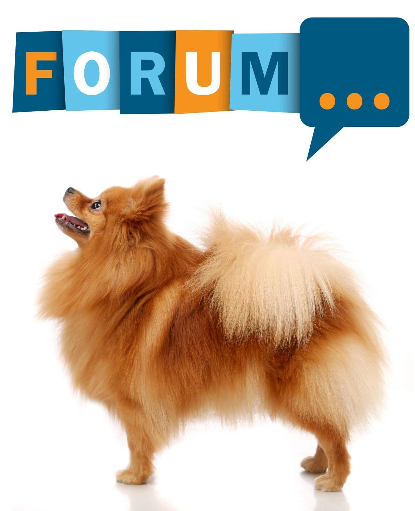Spitz Forum - Fragen und Antworten zum Spitz